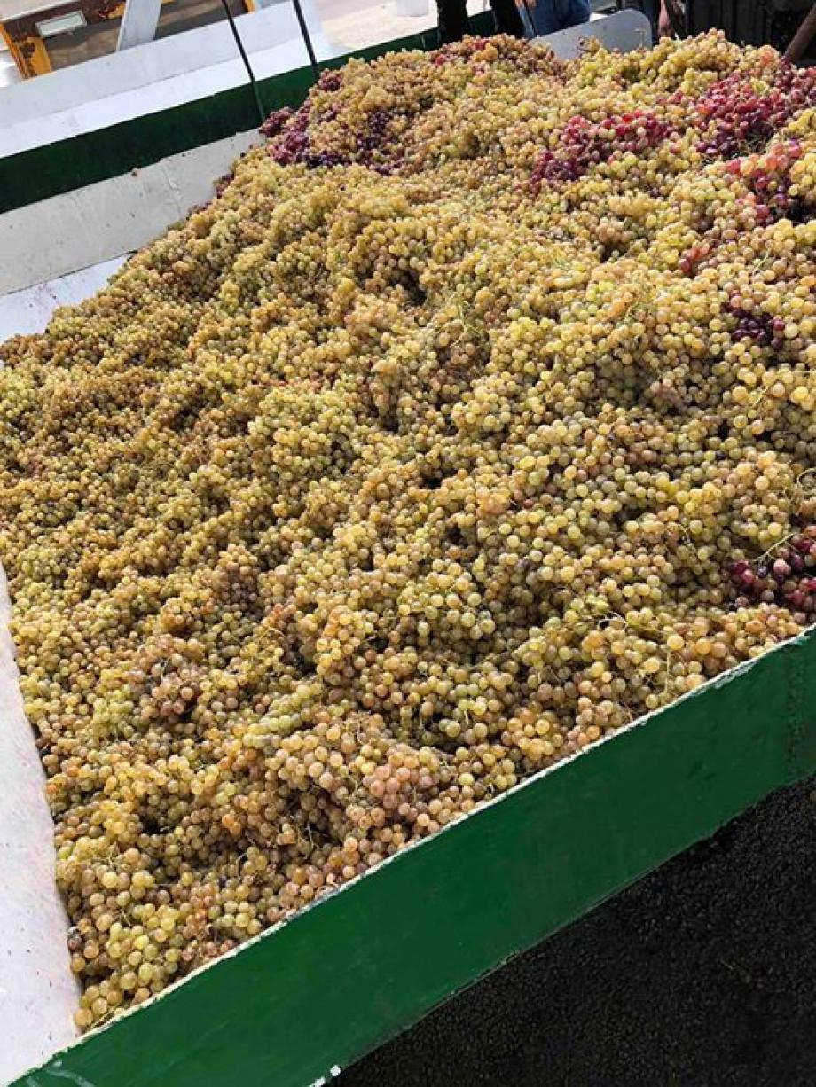 GRAPES STORED IN REFRIGERATORS